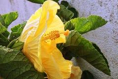 En briljant gul blom som lyfter dina andar royaltyfri fotografi