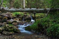 En bro över paradis Royaltyfri Bild