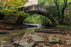 En bro i djungeln royaltyfri fotografi