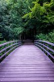 En bro som in leder in i en mörk skog i den Haagse bosen, skog Arkivbild