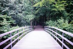 En bro som in leder in i en mörk skog i den Haagse bosen, skog Royaltyfria Foton