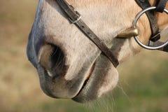 En brun häst Royaltyfri Foto