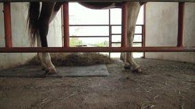 En brun häst i dess stall lager videofilmer