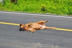 En brun hundövning på gatan royaltyfri bild