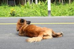 En brun hundövning på gatan royaltyfria foton