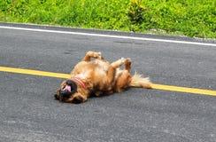 En brun hundövning på gatan royaltyfri fotografi