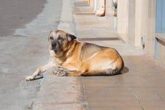 En brun hund som vilar på trottoaren royaltyfri fotografi