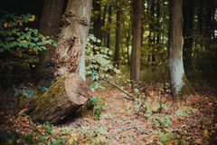 En bruten skog Arkivfoto