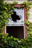En brutna Windows i ett övergett byggande som är bevuxet med murgrönan Arkivbild