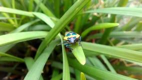 En Bug& x27; s-liv royaltyfri foto