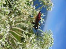En bugga på en växt Fotografering för Bildbyråer
