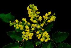 En bukett av blommor från ett gräs av en buske på berget arkivfoton