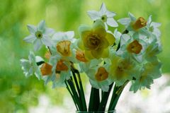 En bukett av blommor p? en klarteckenbakgrund Vit pingstlilja i en vas St?lle f?r din text visa f?nstret arkivfoto
