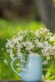 En bukett av den vita delikata våren blommar i en blå enkel kopp Fotografering för Bildbyråer