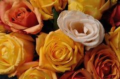 En bukett av färgrika rosor royaltyfri bild