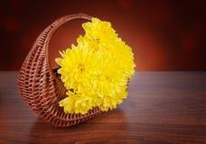 En bukett av gula krysantemum i en vide- korg Royaltyfri Fotografi
