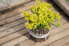 En bukett av härlig liten guling som blomstrar blommor, kallade r arkivfoto