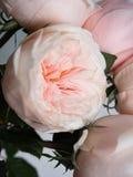 En bukett av härliga delikata blommor för ett bröllop royaltyfri foto