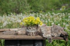En bukett av h?rliga sm? gula blomstra blommor som kallas, v?ldtar i en kruka och en katt p? en tabell under en gr?n ?ng i sommar arkivbild