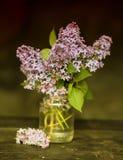 En bukett av lilan Fotografering för Bildbyråer