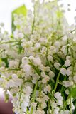 En bukett av liljekonvaljer p? en vit bakgrund royaltyfri bild