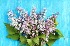 En bukett av lilor Fotografering för Bildbyråer