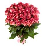 En bukett av nya rosa färger, röda rosor som isoleras på vit bakgrund Arkivbilder