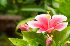 En bukett av röda blommor med gröna sidor Arkivbild