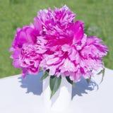 En bukett av rosa pioner i en vas Fotografering för Bildbyråer
