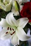 En bukett med ett vitt lilly royaltyfria foton