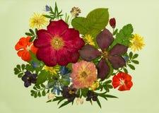 En bukett på ljus bakgrund Bild från torra blommor Royaltyfri Foto