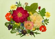 En bukett på ljus bakgrund Bild från torra blommor Arkivfoton