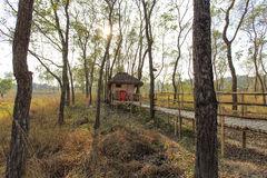 En bungalow i en skog Royaltyfria Foton