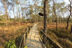 En bungalow i en skog Royaltyfria Bilder