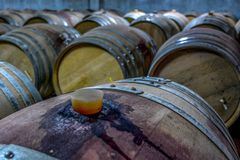 En bunt av vinfat på en vingård royaltyfria bilder
