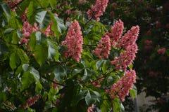 En buske i blomning france arkivfoton
