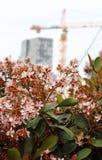 En buske med rosa blommor royaltyfri bild