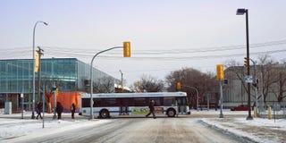En buss för rutt för stamgästWinnipeg stad som fortskrider territoriet av universitetet av Manitoba royaltyfri foto