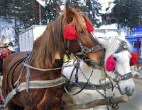 En caballos del arnés dos en invierno imágenes de archivo libres de regalías