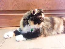 En Cat Facing royaltyfria foton
