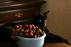 En Cat With Grapes Royaltyfri Fotografi