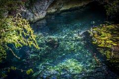 En cenote i Mexico Royaltyfria Bilder