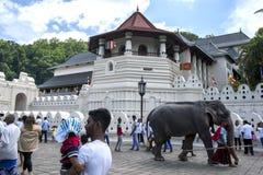 En ceremoniell elefant går förbi templet av den sakrala tandreliken före Esalaen Perahera i Kandy i Sri Lanka Royaltyfri Fotografi