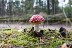En champinjon i en skog Royaltyfria Bilder