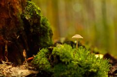 En champinjon växer i skognärbilden arkivbild