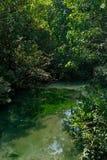 En charmig genomskinlig flod i mangroveskogen royaltyfri bild