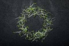 En cirkel av nytt microgreen grönsaksallad på en svart bakgrund, utrymme för text arkivbild