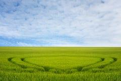 En cirkel i ett fält av grön havre arkivbilder