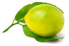 En citron som isoleras på vit fotografering för bildbyråer