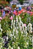 En closeup av den vita stormhattblomman royaltyfri foto